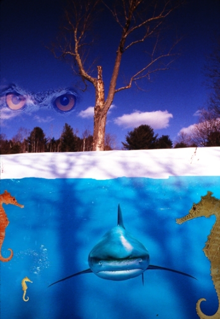 Maria_ledesma_undersea_montage